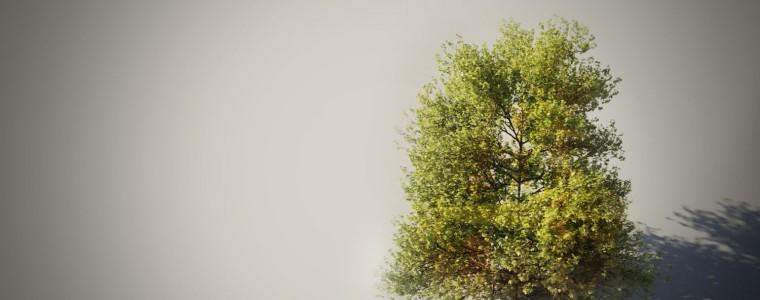Tree-maker-cover